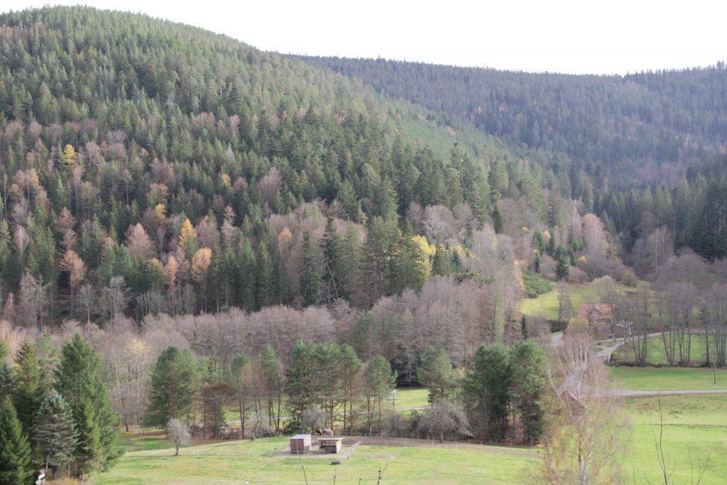 Familienbett ökologisch nachhaltig bauen Schwarzwald